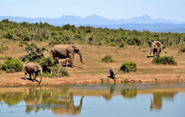 Ecotourism in South Africa